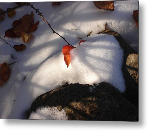 Nature Metal Print featuring the photograph Red Leaf by Marilynne Bull