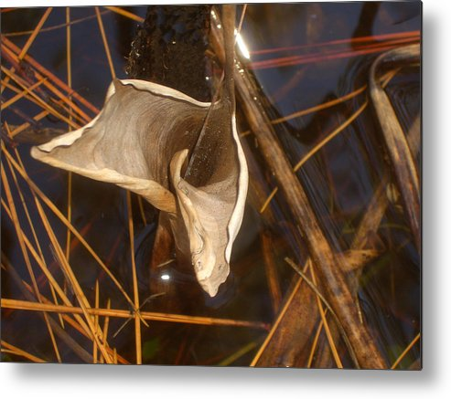 Reeds Metal Print featuring the photograph Reeds by Steve Ellis