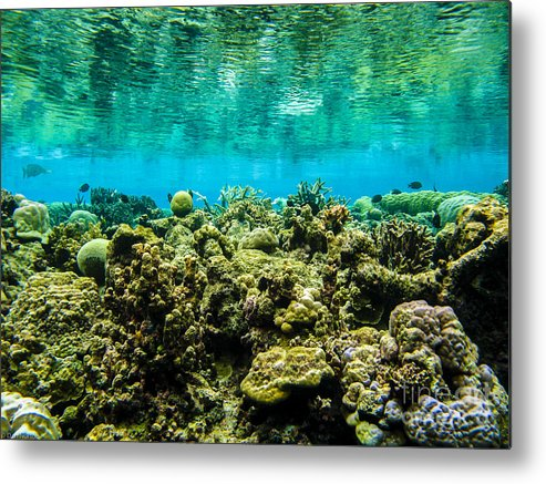 Coral Metal Print featuring the photograph Reef At Ahnd Atoll by Dan Norton