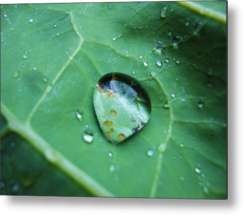 Dewdrop Metal Print featuring the photograph Reflection In A Dew Drop by Gemma Fox