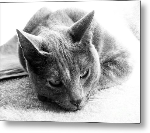 Cats Metal Print featuring the photograph Resting by Amanda Barcon