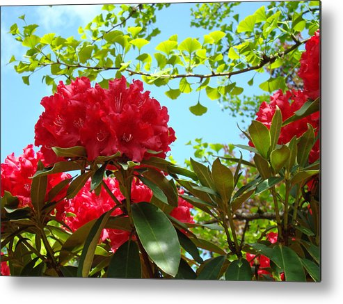 Rhodies Metal Print featuring the photograph Rhodies Art Prints Red Rhododendron Floral Garden Landscape Baslee by Baslee Troutman