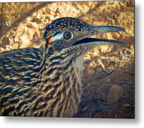Arizona Metal Print featuring the photograph Roadrunner Portrait by Judy Kennedy