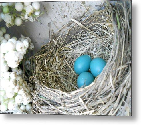 Nature Metal Print featuring the photograph Robin Eggs In A Wreath by Marqueta Graham
