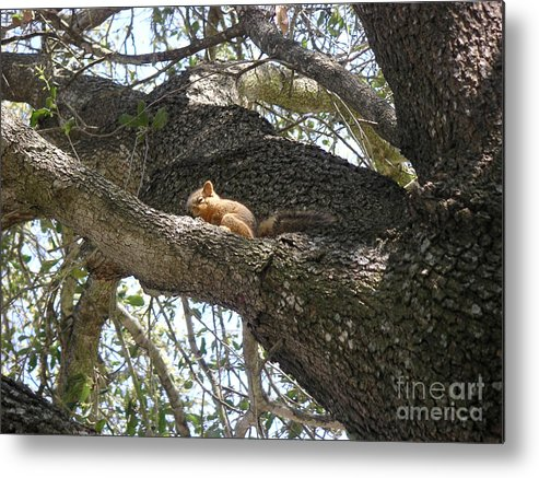 Nature Metal Print featuring the photograph Rock-a-bye Baby... by Lucyna A M Green
