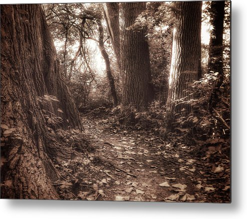 Faith Metal Print featuring the photograph Rooted by Michael Ahlrichs