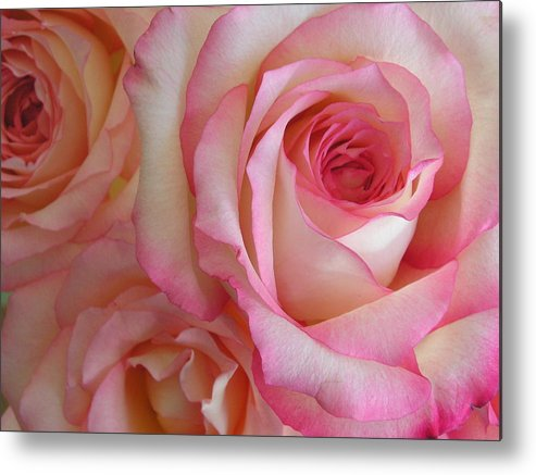 Rose Metal Print featuring the photograph Roses by Stephanie Golden