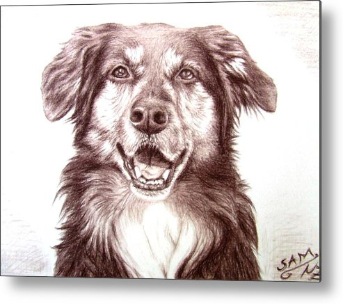 Dog Metal Print featuring the drawing Sam by Nicole Zeug