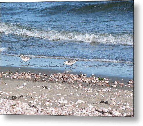 Sandpiper Metal Print featuring the photograph Sandpipers At The Seashore by Margie Avellino