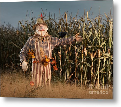Scarecrow Metal Print featuring the photograph Scarecrow In A Corn Field by Oleksiy Maksymenko