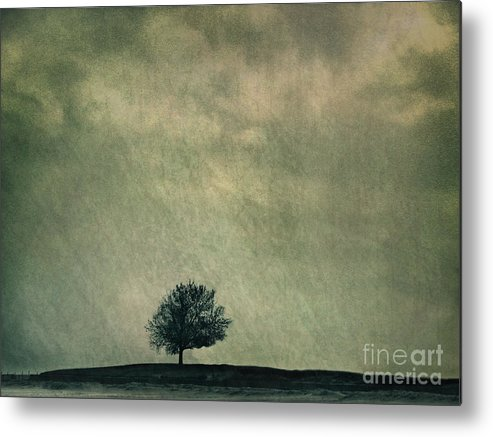Blue Metal Print featuring the photograph Screaming At The Top Of My Voice by Dana DiPasquale