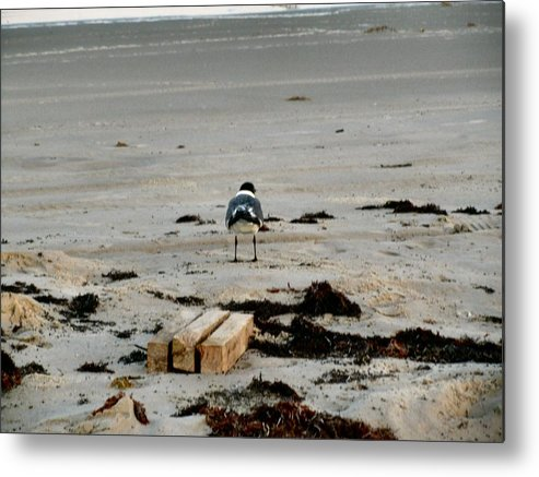 Seagull Metal Print featuring the photograph Seagull 5 by Camera Candy