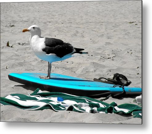 Bird Metal Print featuring the photograph Seagull On A Surfboard by Christine Till