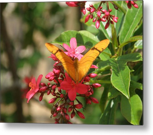 Butterfly Metal Print featuring the photograph Shades Of Orange by Mary Hurst