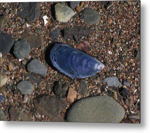 Shell Metal Print featuring the photograph Shell Among Rocks by Melissa Parks