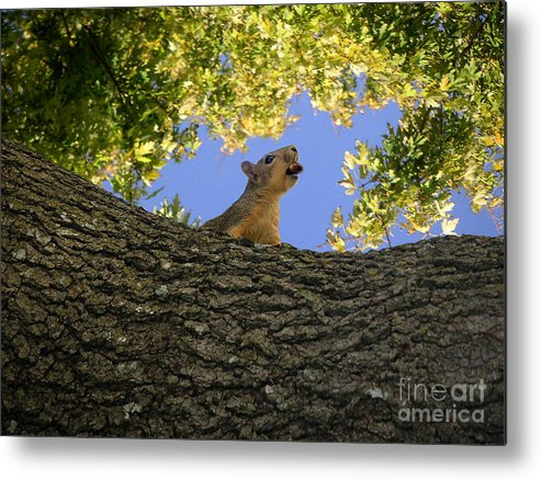 Nature Metal Print featuring the photograph Show But Not Tell by Lucyna A M Green