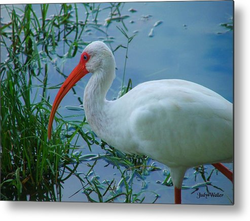 Bird Metal Print featuring the photograph Side Profile by Judy Waller