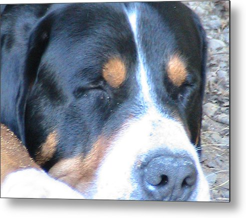 Dog Metal Print featuring the photograph Sleeping Beast by Rachel Snell