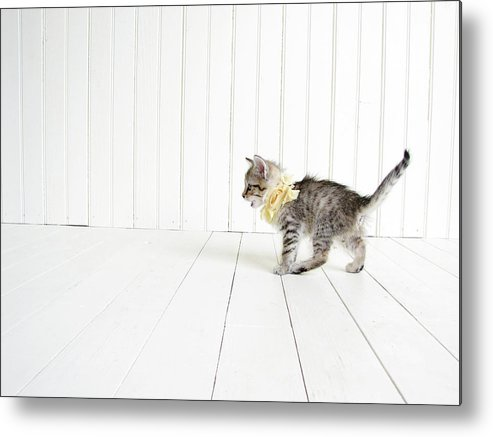 Kitten Metal Print featuring the photograph Small by Amy Tyler