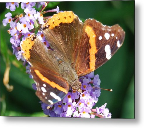 Butterfly Metal Print featuring the photograph Smooth Landing by Michael L Gentile