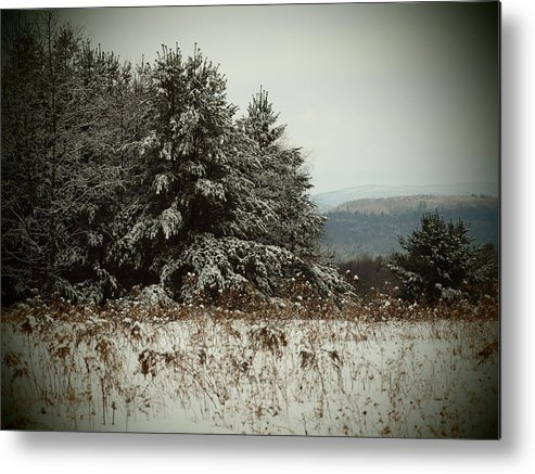 Pines Metal Print featuring the photograph Snowy Pines by Tammy Bullard