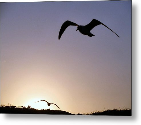 Seagull Metal Print featuring the photograph Soaring Seagulls Blue by Camera Candy