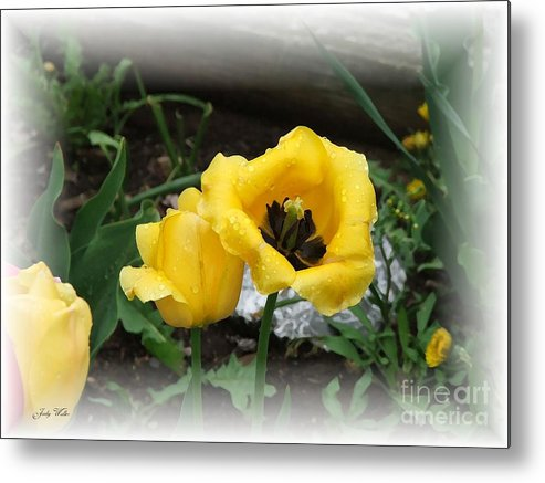 Yellow Metal Print featuring the photograph Soft Yellow by Judy Waller