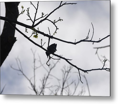 Birds Metal Print featuring the photograph Solitude by Lakida Mcnair