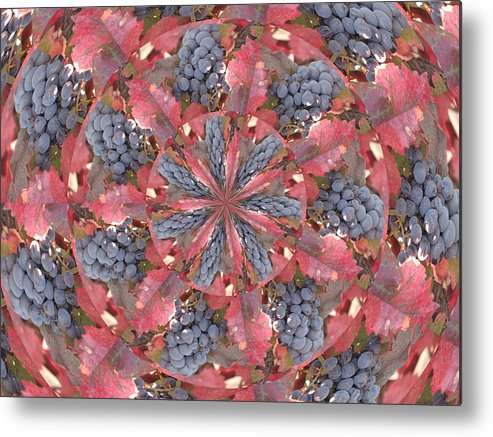 Grapes Metal Print featuring the photograph Sonoma Vines by Judy Ford
