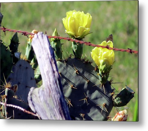 Cactus Metal Print featuring the photograph South Texas Fence by Larry Linley
