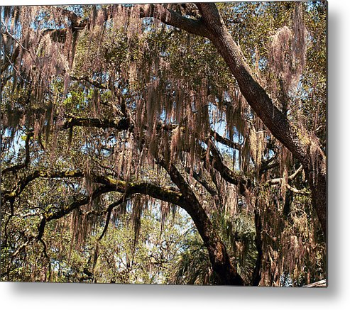 Spanish Moss Metal Print featuring the photograph Spanish Moss by Bob Johnson