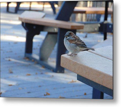 Sparrow Metal Print featuring the photograph Sparrow 2 by Karen Capehart