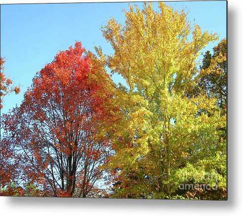 Autumn Metal Print featuring the photograph Spectacular Autumn Colors by Matthew Seufer