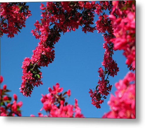 Spring Metal Print featuring the photograph Spring Blossoms by Juergen Roth