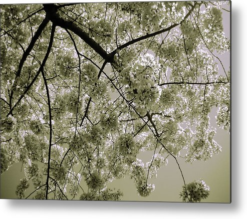 Photo Metal Print featuring the photograph Spring Display by Julia Raddatz