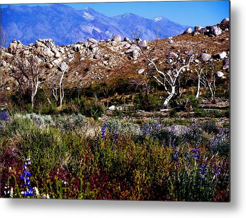 Eastern Sierra Metal Print featuring the photograph Spring In Onion Valley by Tina Slee