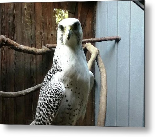 Bird Metal Print featuring the photograph Stand Tall by Hannah Eby