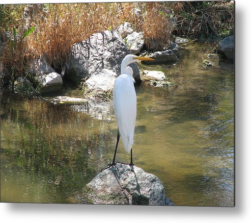 Loon Metal Print featuring the photograph Standing Alone 2 by Kathy Roncarati