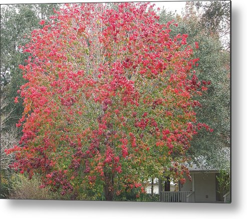 Trees Metal Print featuring the photograph Study In Red by Paula Coley