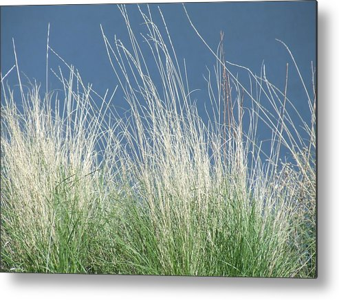 Grass Metal Print featuring the photograph Study Of Grass by Tiffany Vest