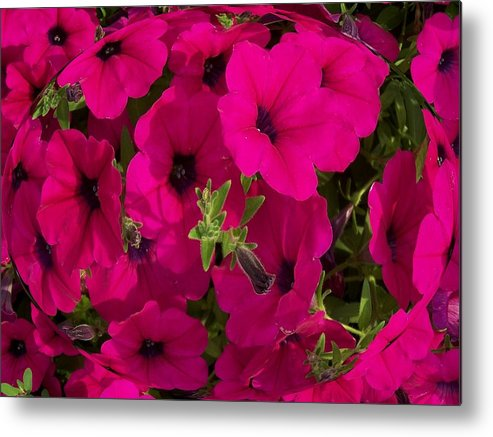 Summer Metal Print featuring the photograph Summer Glamor by Vijay Sharon Govender