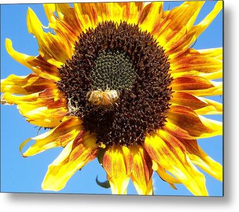 Sunflower Metal Print featuring the photograph Sun Flower by Gene Ritchhart