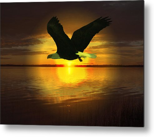 Sunset Eagle Water Lake Birds Of Prey Hunting Flying Skyscape Metal Print featuring the photograph Sunset Eagle by Andrea Lawrence