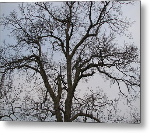 Trees Metal Print featuring the photograph Sunset Hickory Tree by Kathryn Goszinski
