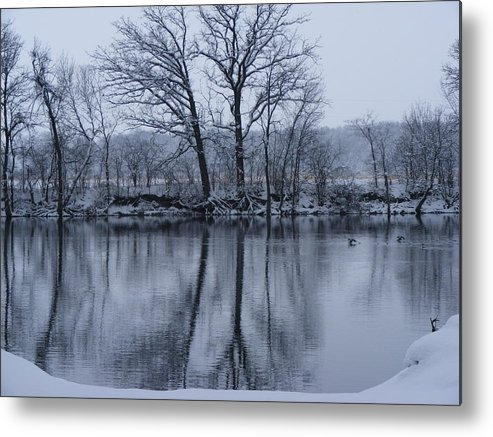 Nature Metal Print featuring the photograph Swiming Duck by Cindy Yeakel