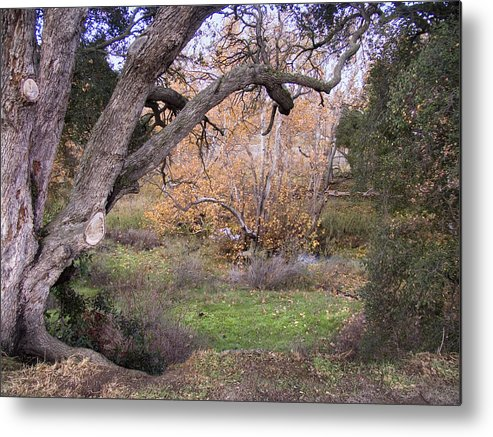 Landscape Metal Print featuring the photograph Sycamore Grove Fall by Karen W Meyer