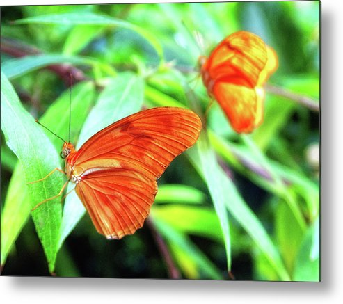 Nature Metal Print featuring the photograph Taking A Break by Annee Olden