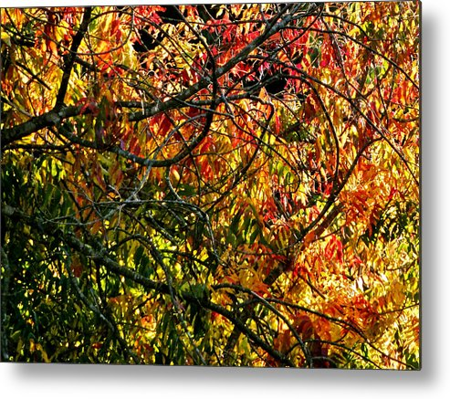 Trees Metal Print featuring the photograph Tangled Branches by Liz Vernand