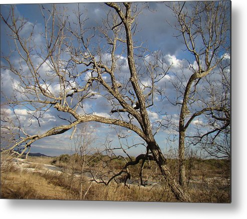 Dry Metal Print featuring the photograph Texas Winter One by Ana Villaronga