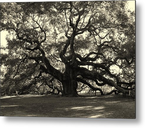 Angel Oak Metal Print featuring the photograph The Angel Oak by Susanne Van Hulst